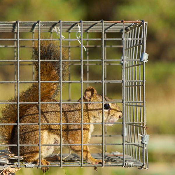 CritterPro Liability Insurance for the wildlife management and animal control industry